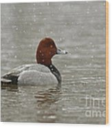 Redhead Duck In Winter Snow Storm Wood Print