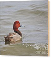 Redhead Duck Wood Print