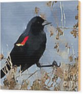 Redwing Blackbird Wood Print