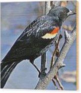Redwinged Blackbird I Wood Print