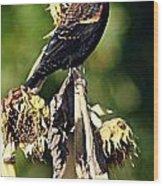 Redwinged Blackbird II Wood Print