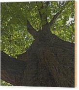 Redwood 1 Wood Print
