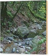 Redwood Creek Art Wood Print
