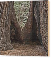 Redwood Feet Wood Print
