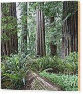 Redwood National Park, California Wood Print