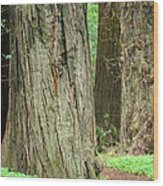 Redwood Trees Art Prints Big California Redwoods Wood Print