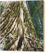 Redwood Trees Forest Art Prints Redwoods Wood Print