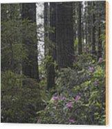 Redwoods 3 Wood Print