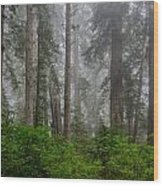 Redwoods In Breaking Mists Wood Print