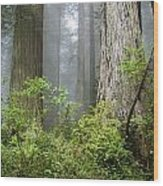 Redwoods In May Wood Print