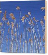 Reed Grass Wood Print