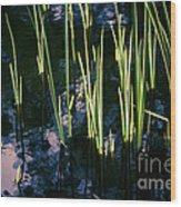 Reeds At Sunset Wood Print