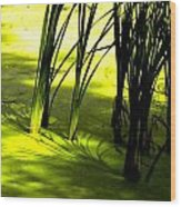 Reeds In Pond Wood Print