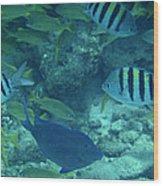 Reef Fish Wood Print