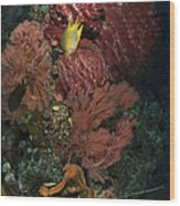 Reef Sponge Coral And Yellow Fish Wood Print