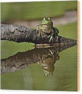 Reflecktafrog Wood Print