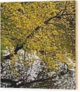 Reflecting Autumn Tree Wood Print