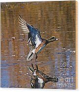 Reflecting Duck Wood Print