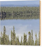 Reflection In Willow Lake Near Copper Wood Print by Rich Reid