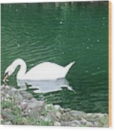 Reflection Of A Swan Wood Print