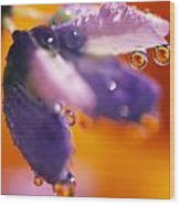 Reflection Of Flower In Dew Drops Wood Print