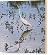 Reflections Of A White Bird Wood Print