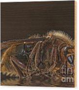 Reflexion D'un Hornet  Wood Print