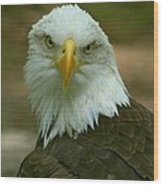 Regal Eagle Portrait Wood Print