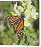 Monarch Butterfly Feeding On A Cluster Of Yellow Flowers Wood Print