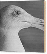 Regal Seagull Wood Print