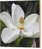 Regal Southern Magnolia Blossom Wood Print
