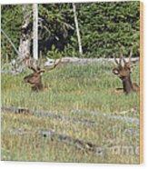 Relaxed Elk Wood Print