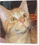 Rescue Kitty Max Wood Print
