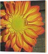 Resplendent Beauty Wood Print