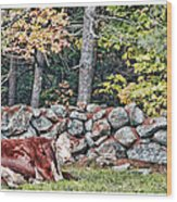 Resting Hereford Wood Print