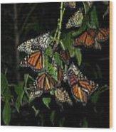 Resting Monarchs Wood Print