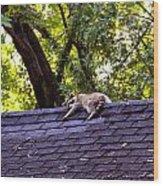 Resting Raccoon Wood Print by Yelena Rubin