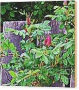 Resting Rosebuds Enhanced Wood Print