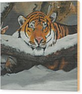 Resting Tiger Wood Print