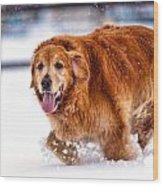 Retriever Running In Snow Wood Print by Matt Dobson