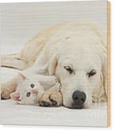 Retriever With Friendly Kittens Wood Print