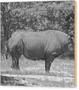 Rhino In Black And White Wood Print