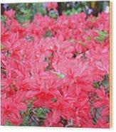Rhodies Art Prints Pink Rhododendrons Floral Wood Print