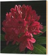 Rhododendron At Sunset 1 Wood Print
