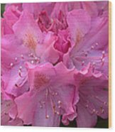 Rhododendron Bloom Wood Print