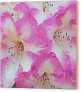 Rhododendron- Hot Pink Wood Print