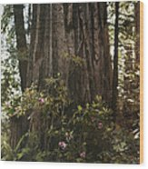 Rhododendrons Bloom Around The Trunk Wood Print