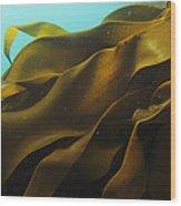 Ribbon Kelp Durvillaea Antarctica Wood Print