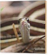 Ribbon Snake Wood Print