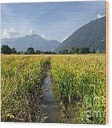 Rice Field Wood Print
